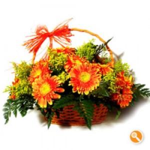 Cesta Gerbera cor de laranja