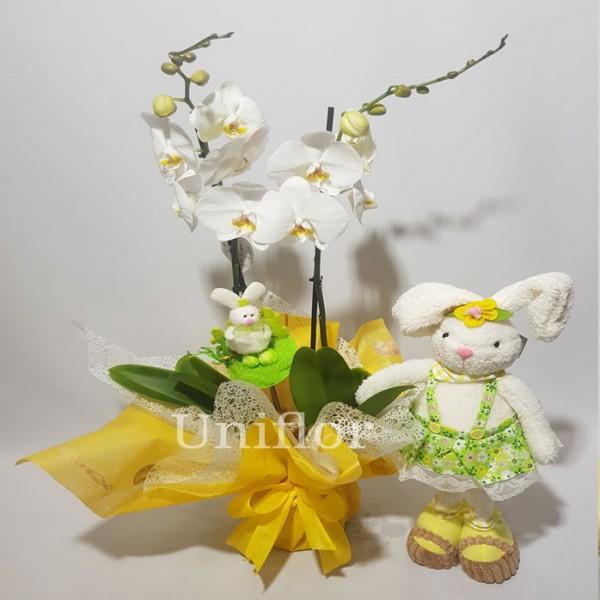 Orquídea Branca da Páscoa