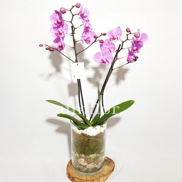 Jarra de Orquídeas Rosa