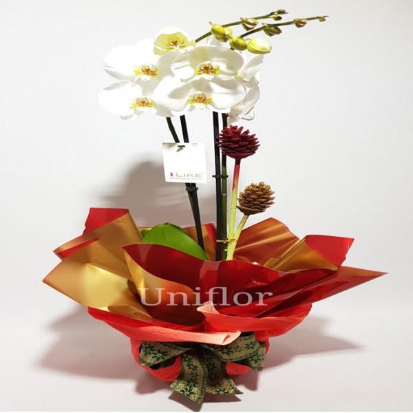 Orquídea Branca Natal